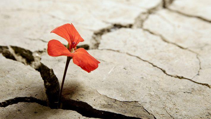 cosa vuol dire resilienza