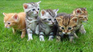 Allergie agli animali domestici gatti